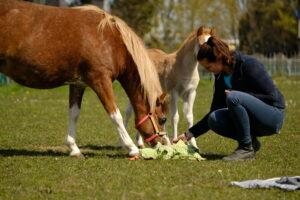 Paard met veulen en hersenwerkje