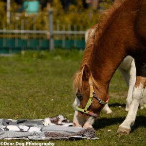 Snuffelend paard