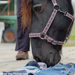 Paard aan het snuffelen